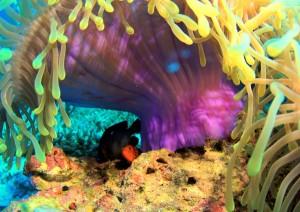 Underwater South Maldives