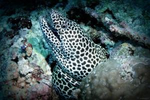 Ari atoll Maldives