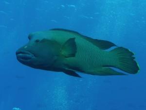 Micronesia Palau